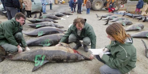 753 dauphins retrouvés morts sur la côte