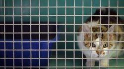La SPA veut des familles d'accueil pour les animaux vieux ou