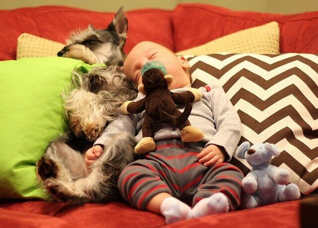 À VOIR: 21 raisons pour vous convaincre que l'achat d'un chien sera LE meilleur