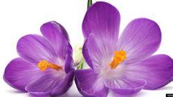 Santé: connaissez-vous les fleurs de