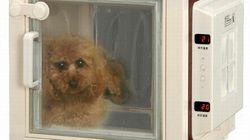 Un frigo pour animaux de compagnie