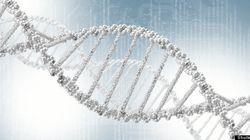 L'ADN humain ne peut pas être