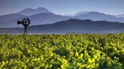 Mettez le cap sur les vins de l'Afrique du