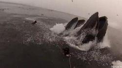 Voilà ce que ça fait d'être (presque) dévoré par des baleines