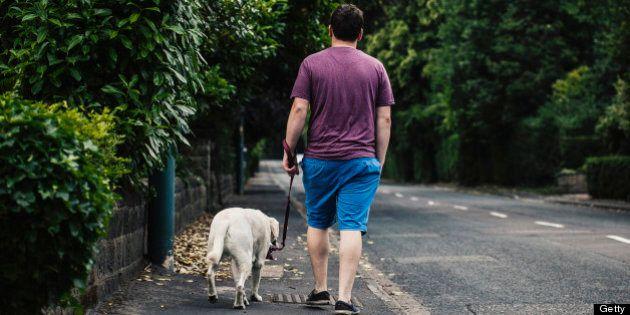 Man walking his Golden Labrador pet