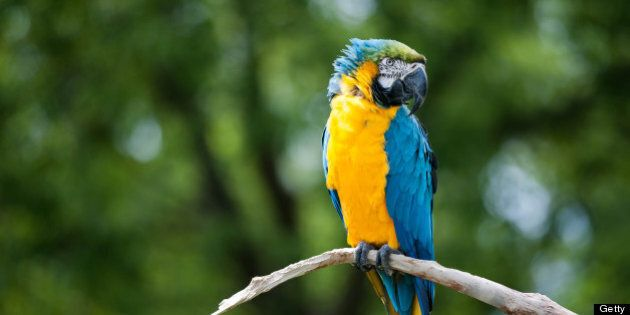 Parrot perched on a branch, blurred background.