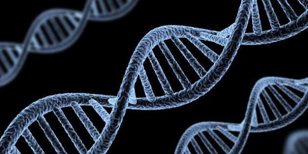 ADN: année
