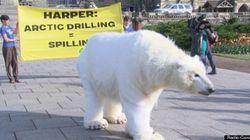Un ours polaire sur la colline du Parlement à