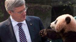 «Pandamanie» à