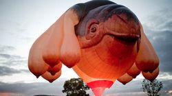 Une baleine volante dans le ciel australien