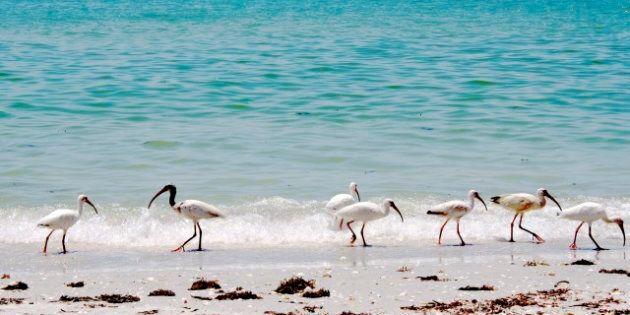 Les «Snowbirds» canadiens pourraient bientôt passer plus de temps en