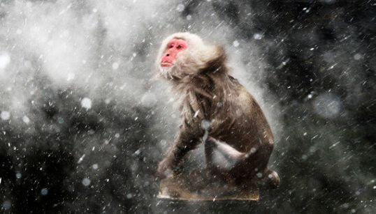 Les plus beaux clichés de la vie sauvage en 2013