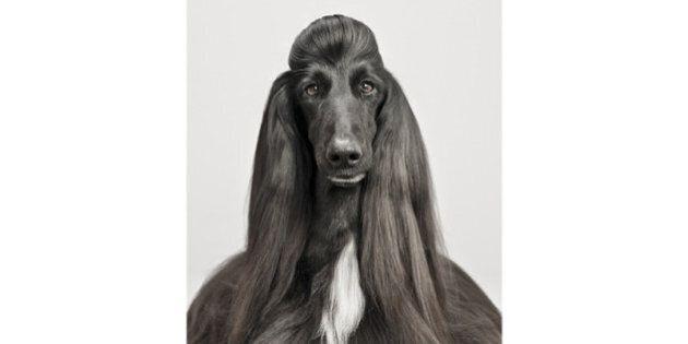 Pablo Axpe, des portraits de chiens pour dénoncer la marchandisation des animaux