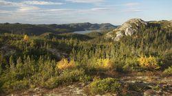Produits forestiers Résolu: Greenpeace Canada se