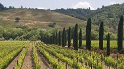 Quelles sont les destinations viticoles préférées des