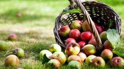 Beauté: les mille et une vertus des pommes sur notre