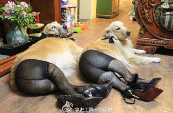 Tendance: mettre des collants aux chiens, la nouvelle mode en Chine