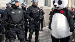 PANDACTION CONTRE P-6: Anarchopanda amasse des