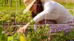 Cultivez vos légumes à la maison: comment jardiner où que vous