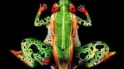 «Body-painting»: ceci N'EST PAS une grenouille