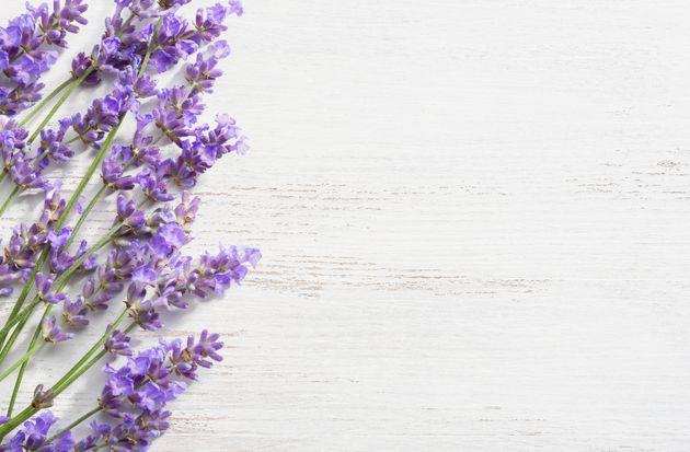 5 plantes aromatiques aux vertus médicinales à faire pousser chez