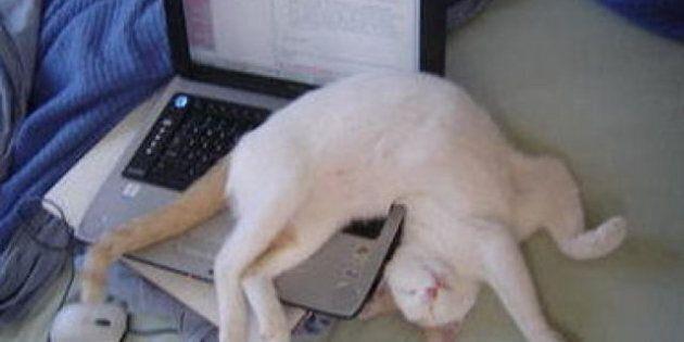 Les chats dorment vraiment n'importe