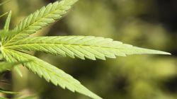 L'illégalité de la marijuana au Canada est confirmée en Cour