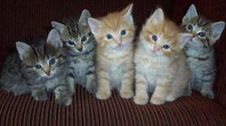 Les 10 résolutions les plus populaires de 2013 illustrées par des chats