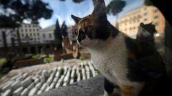 Un chat inconsolable se rend chaque jour sur la tombe de son maître