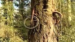 Un vélo englouti par un