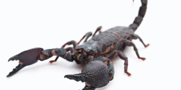 Piquée par un scorpion dans un avion de la compagnie
