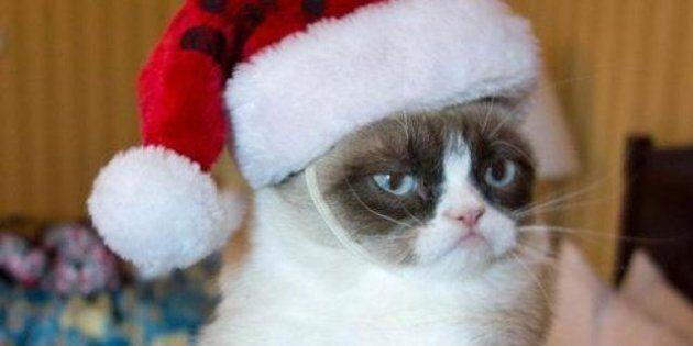 Grumpy Cat n'aime pas Noël: 12 memes pour le prouver
