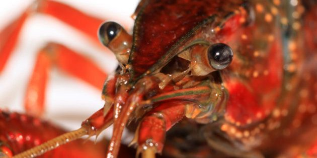 close up of crayfish on a white