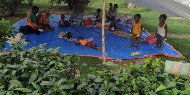 Inde : des ouvriers dans une plantation de thé brûlent leur patron et son