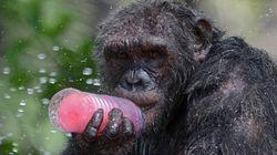 Insolite: Délices glacés pour les animaux d'un zoo