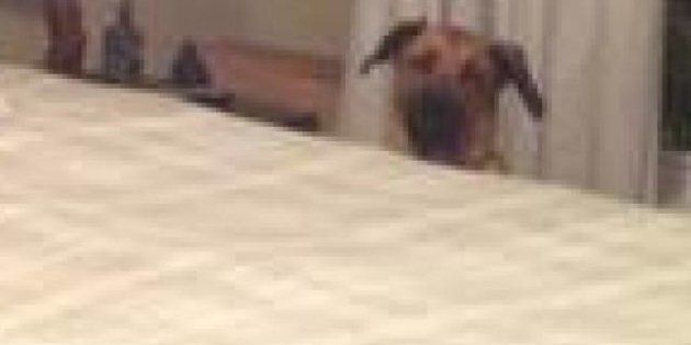 Photobombs: son chien gâche les photos de son appartement pour mieux le vendre