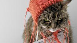 LOLcat, l'exposition à voir à Londres!