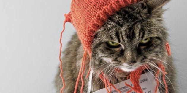 LOLcat, l'exposition a ouvert ses portes dans une galerie londonienne jusqu'au 15 février