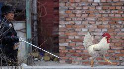 Shanghai ferme ses marchés de volailles en raison de la grippe