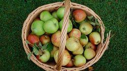 8 bienfaits des pommes sur la santé