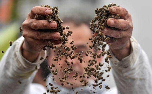Δραματική προειδοποίηση του ΟΗΕ: 1 εκατομμύριο είδη απειλούνται με