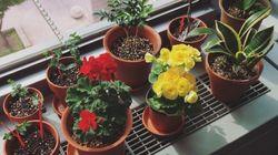 불쑥 나타난 식물들이 사무실 분위기를