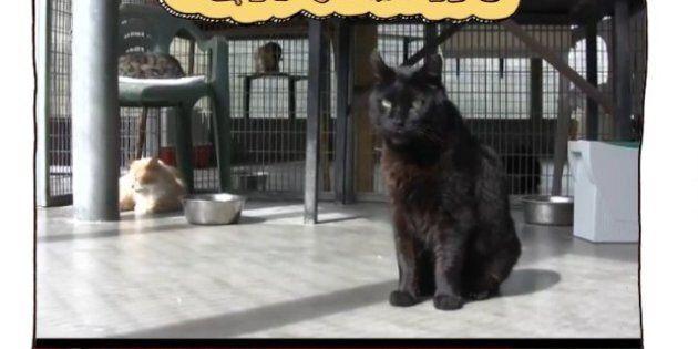 Catroulette, un Chatroulette pour adopter des chats