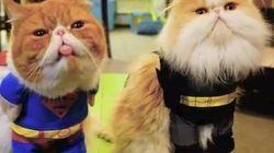 Comment (ne pas) déguiser votre animal pour l'Halloween