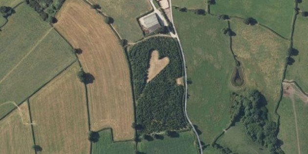 Un agriculteur anglais crée un cœur avec des arbres visible du ciel en hommage à sa femme
