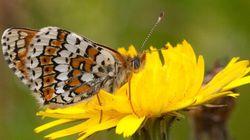 Un papillon exotique au Jardin