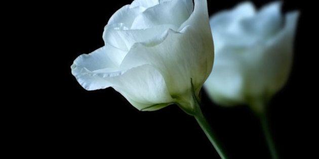 Funérailles de bébé M samedi à Edmonton: elle aurait été sévèrement