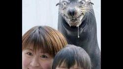 Les meilleures «photobombs» d'animaux