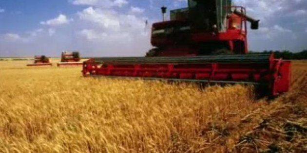 Canada: le nombre de fermes a chuté de plus de 10 % depuis