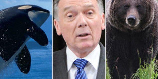 Politique: la loi sur les espèces en péril sera révisée afin qu'elle devienne «plus